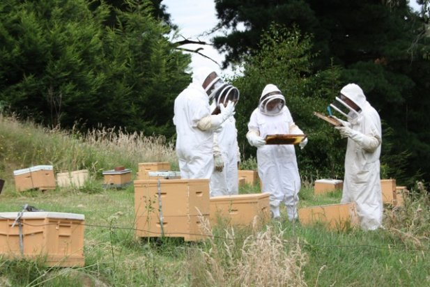 Beekeeping Lessons