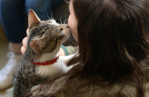 Animals Love Better Than Humans Do