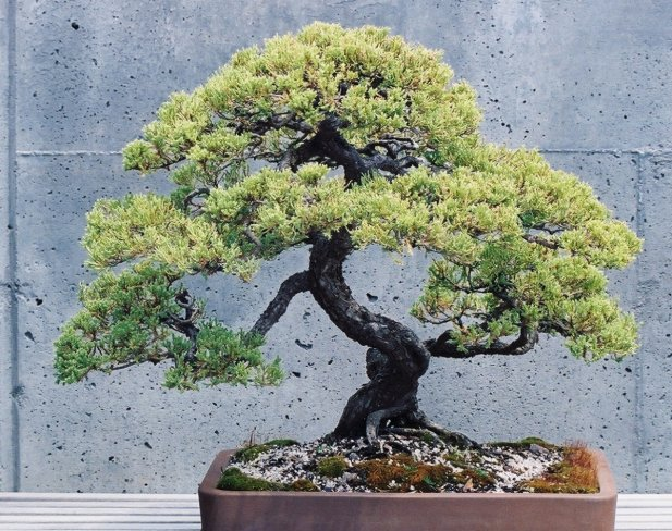 The Six Styles of Bonsai Trees
