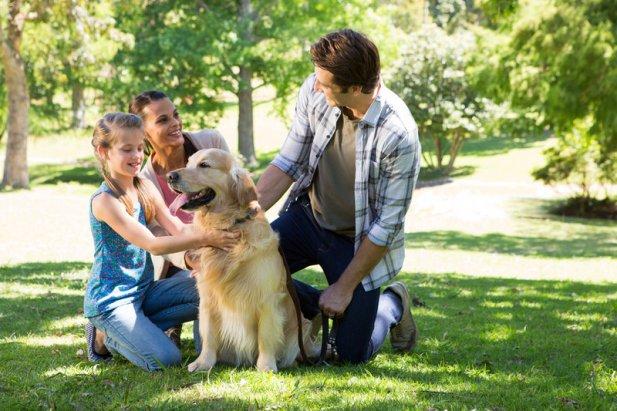 Social Benefits of Summer Dog Walks
